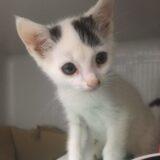 Tierecke - Verein Katzennest