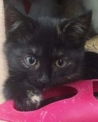 Kätzchen und Katzen - Verein Katzennest