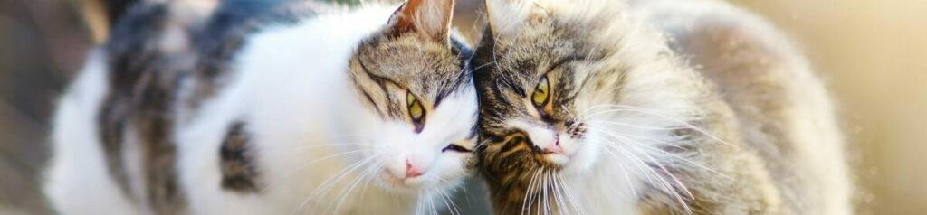 Das Bild zeigt zwei Katzen-Geschwister, die von unserer Vermittlung profitieren durfen.