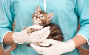 Das Bild zeigt eine Babykatze in den Händen einer Tierärztin