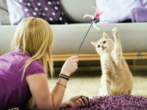 Das Bild zeigt eine Frau, die mit einer der Katzen spielt