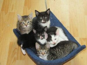 Das Bild zeigt Kätzchen, die Pflegeplätze suchen.